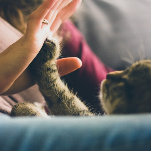 high-five-for-fives