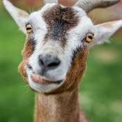 cvh-animal-sanctuary-backyard-farm