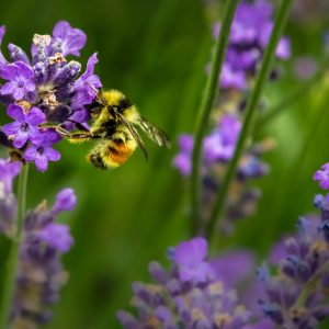 cvh-animal-sanctuary-apiary-and-meadow